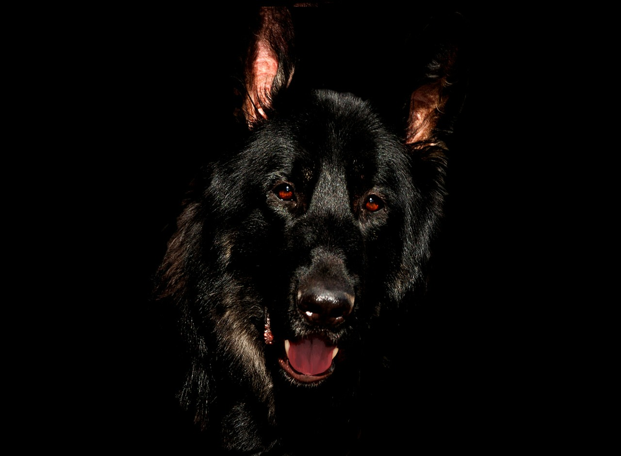 Elektronické výcvikové obojky pro psy