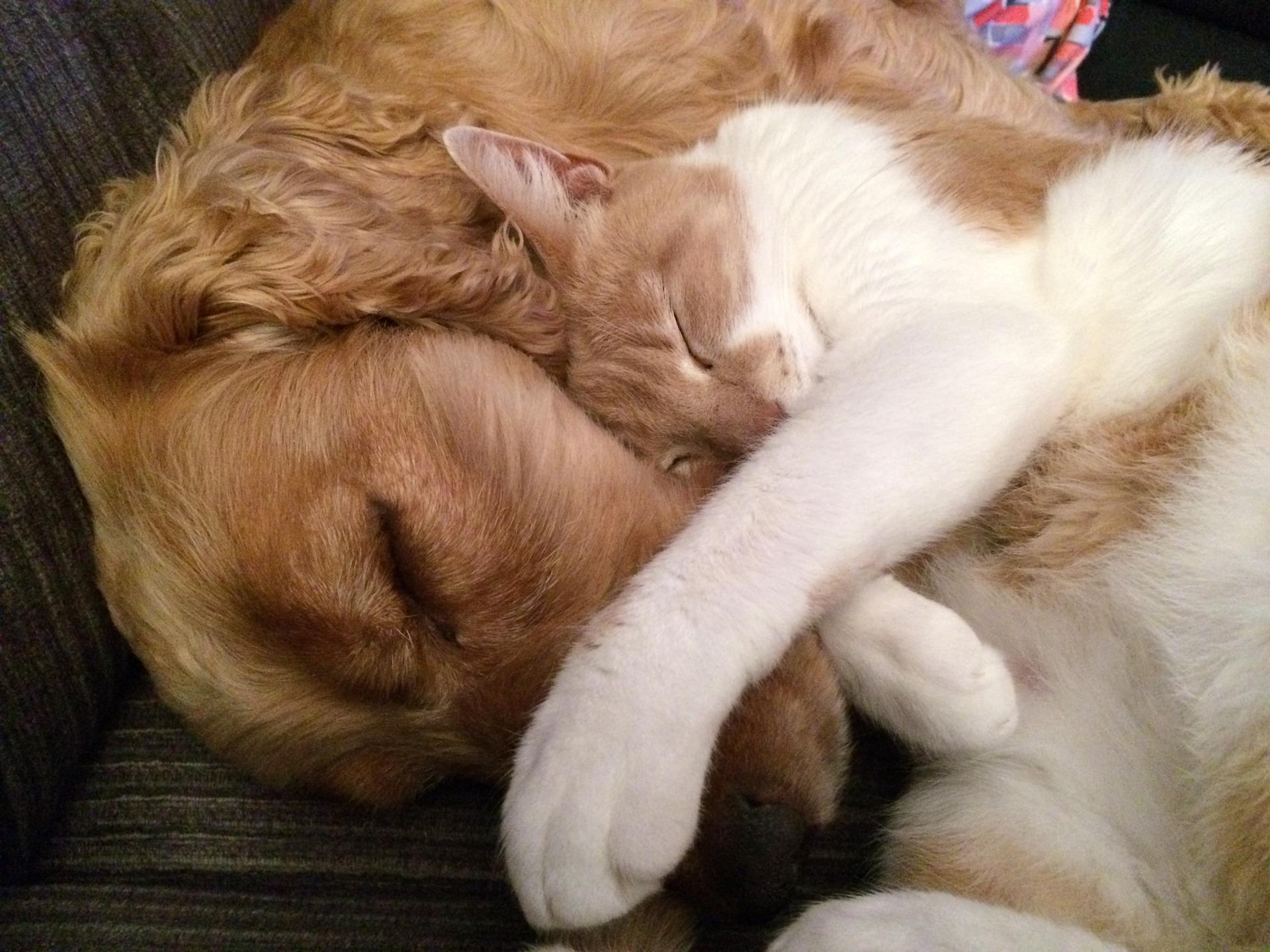 Jak ideálně krmit psa nebo kočku?
