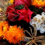 Sušené květiny jako nestárnoucí dekorace