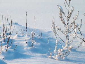 Sněhová fréza